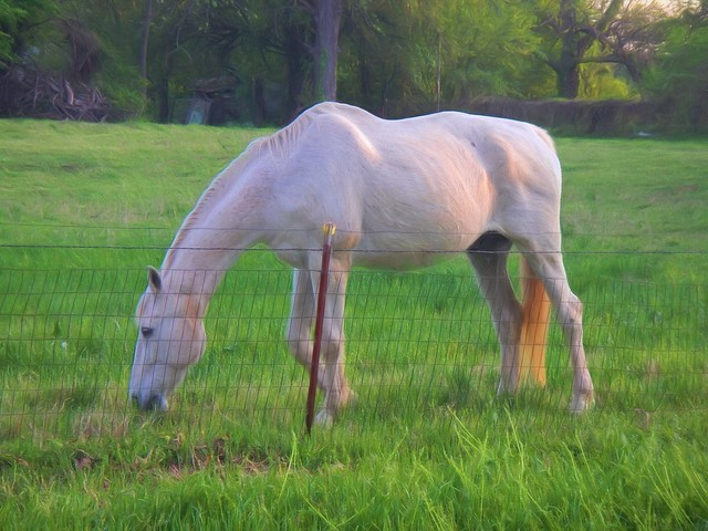 Afternoon Horse -Topaz Impressions