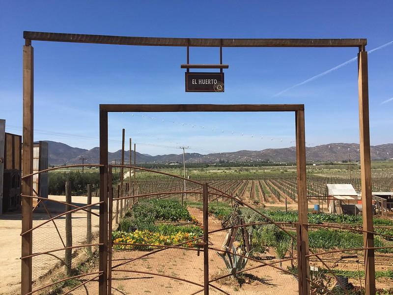 Valle de Guadalupe y Ensenada