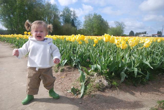 TulipsMaggie
