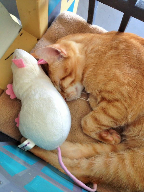 Ginger Cat Sleeping with Rat
