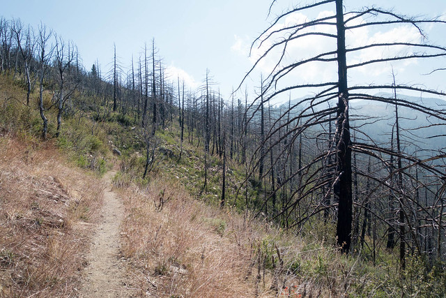 Burnt forest, m355