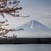 Lake Shoji Spring by shinichiro*@OSAKA