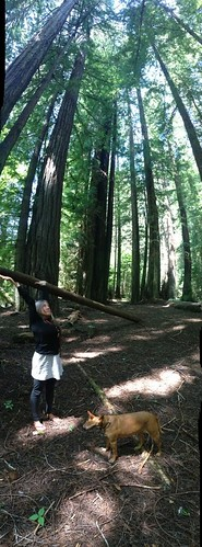 Avenue of the Giants by mikey and wendy