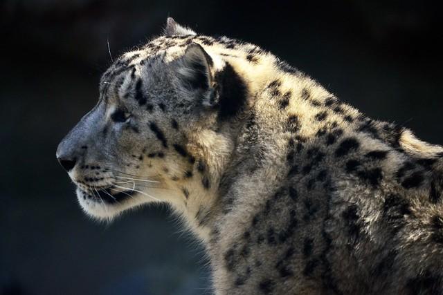 Nubo's Profile