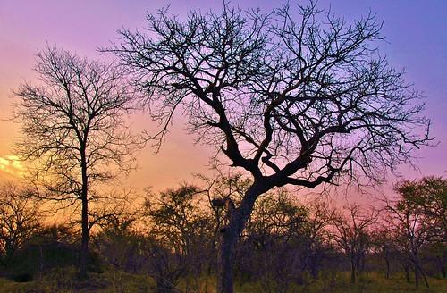 africa sunset tree landscape evening nikon colorful d70s limpopo 18200mm stevelamb phalaborwa