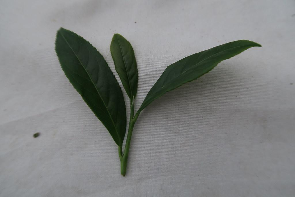 十三製茶 (4)