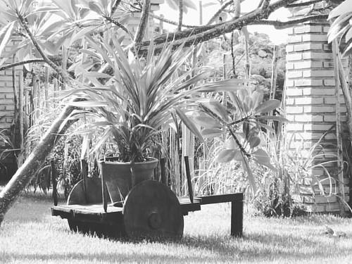 #meuolharemfotos #ednelsonsantosfotografia #fotografia #photography #jardim #fazendafiori #paripueira #alagoas #nordeste #brasil