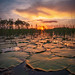 Florida Wetlands Landscape Palm Beach Gardens Sunset by Captain Kimo