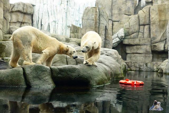 Tierpark Hagenbeck 25.04.2015   114