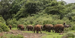 Image of  David Sheldrick Elephant Orphanage. elephant kenya wildlife nairobi elephantorphanage nairobinationalpark davidsheldrick