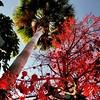 #DTLA #red #foliage by krimpdaddy