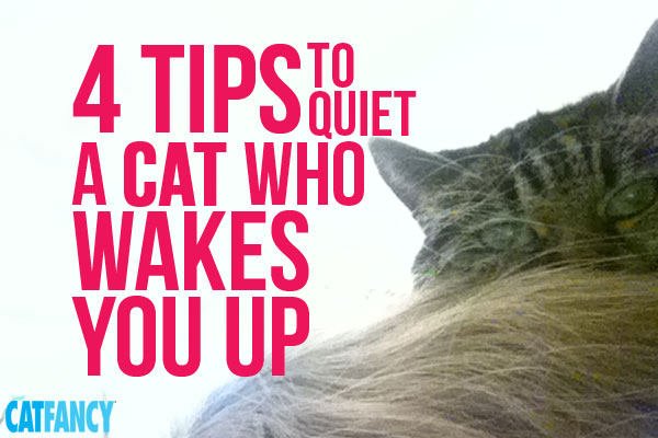 quiet-cats-who-wake-you