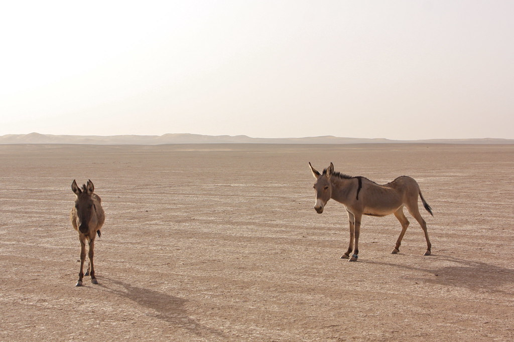 nomadit