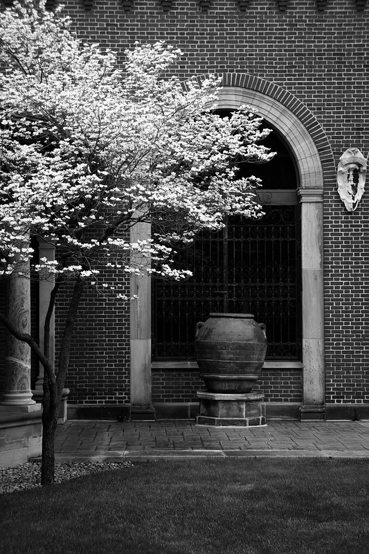 Columns and Dogwood