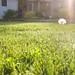 Artsy dandelion