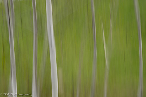 trees abstract texture nature minnesota landscape nikon df birch
