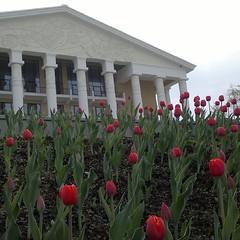 ДК Юбилейный #воткинск #тюльпаны #веснаввоткинске #россия