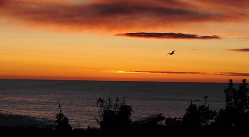 sunrise oamaru