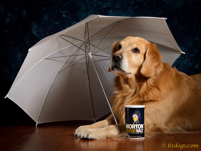 Morton Salt Dog?