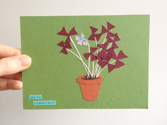 Oxalis Triangularis - postcard club