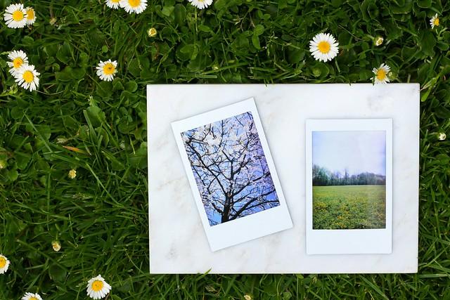 fotografischdurchdiejahreszeiten_fruehling_01