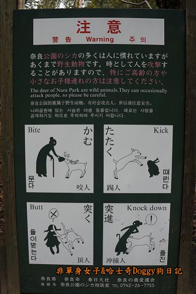 日本奈良公園東大寺13