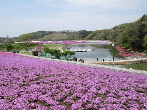 23_東京ドイツ村の芝桜_2