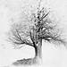 Tree by linghua.zhang