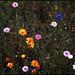spring palette by tetsu-k.