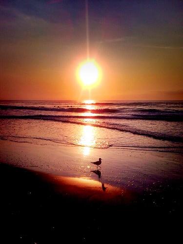 summer beach sunrise seagull avalon avalonnj