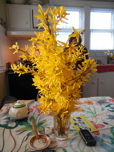 forsythia_on_table