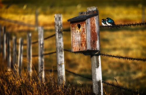 bird field fence spring farm birdhouse alberta barbedwire bluebird