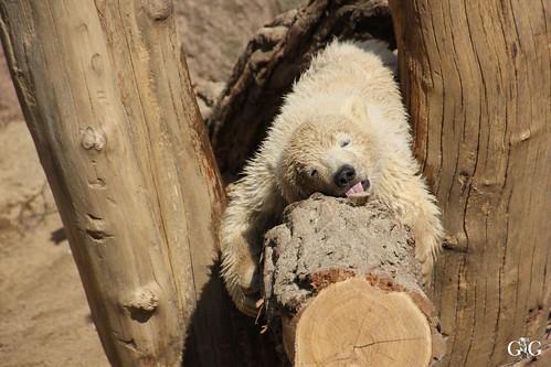 Zoo Rostock 11.04.201532