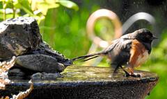 Bird Bath 6
