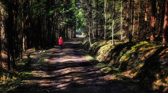 iphone6+ A forest spring walk. Ostfold, Norway SouthEast
