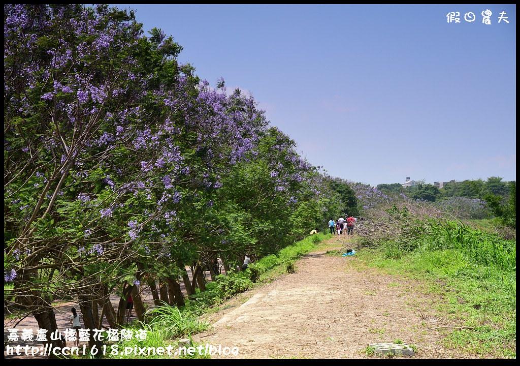 嘉義盧山橋藍花楹隧道DSC_7448