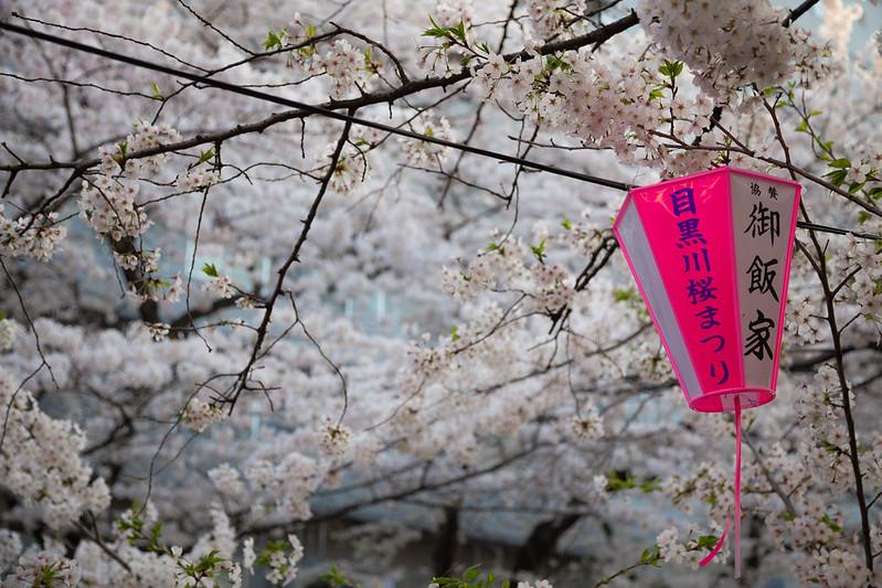 Nakameguro Sakura