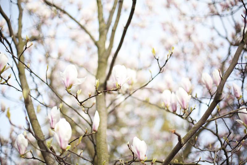 promenad med maria, magnolia och falafelsallad