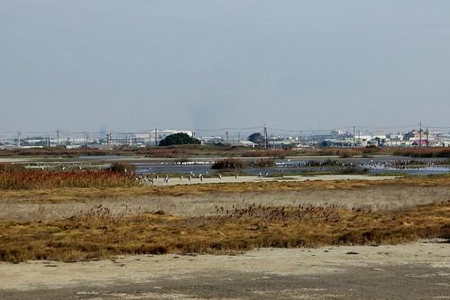 茄萣濕地。(攝影:李文化,圖片來源:林務局提供)