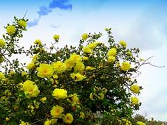 In Rose Garden