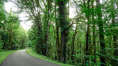 Preston-Snoqualmie Trail