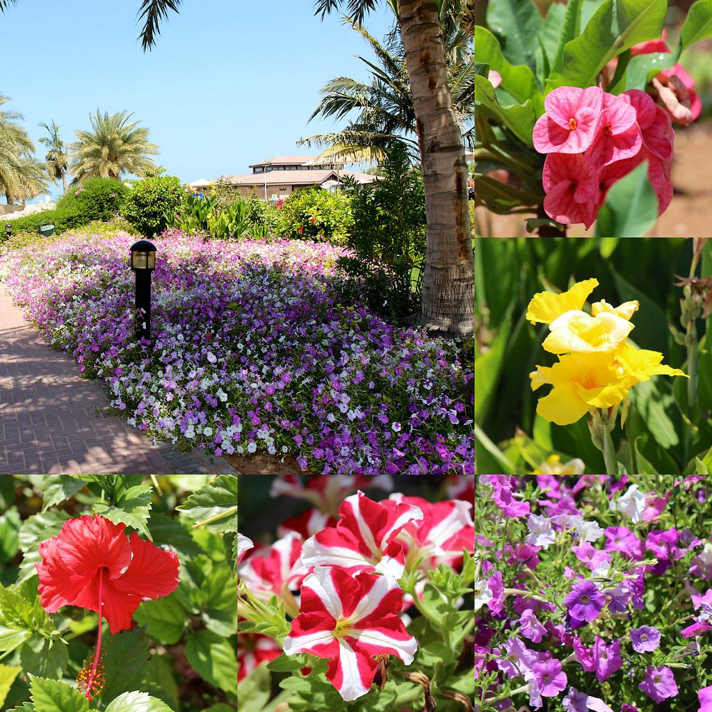 kukkia 2