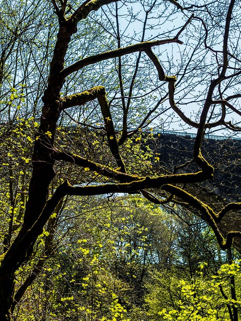 Causey Arch, near Tanfield, North East England UK.