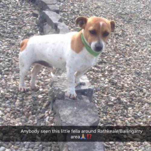 [Reunited] Sun, Jul 10th, 2016 Lost Male Dog - Rathnasare, Rathkeale, Limerick