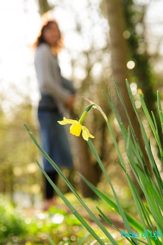 Spring Maternity photo with daffodil