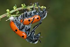Macro en naturaleza