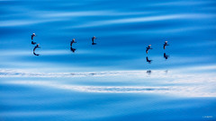 Birds @ Drake Passage