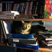 Shelf cat ... will warm your binders for you