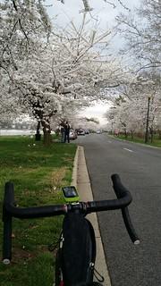 2015 bike 180 : day 41