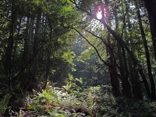 Deep forest, Redwood Regional Park, Oakland, CA, 26APR15